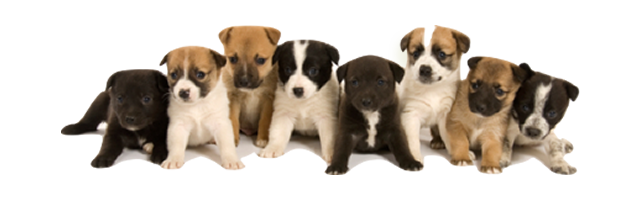 Group Puppy Training for Basic Manners